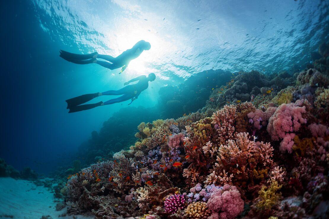 zwei Apnoetaucher tauchen an die Wasseroberfläche unter ihnen ist ein Korallenriff