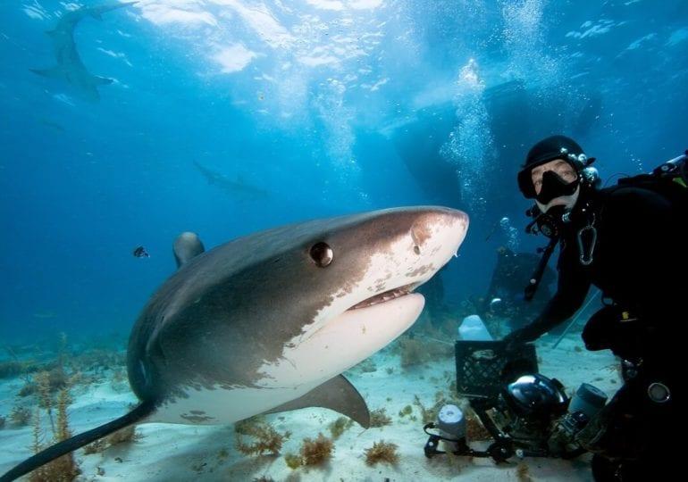 Top 5: Die gefährlichsten Meerestiere der Unterwasserwelt