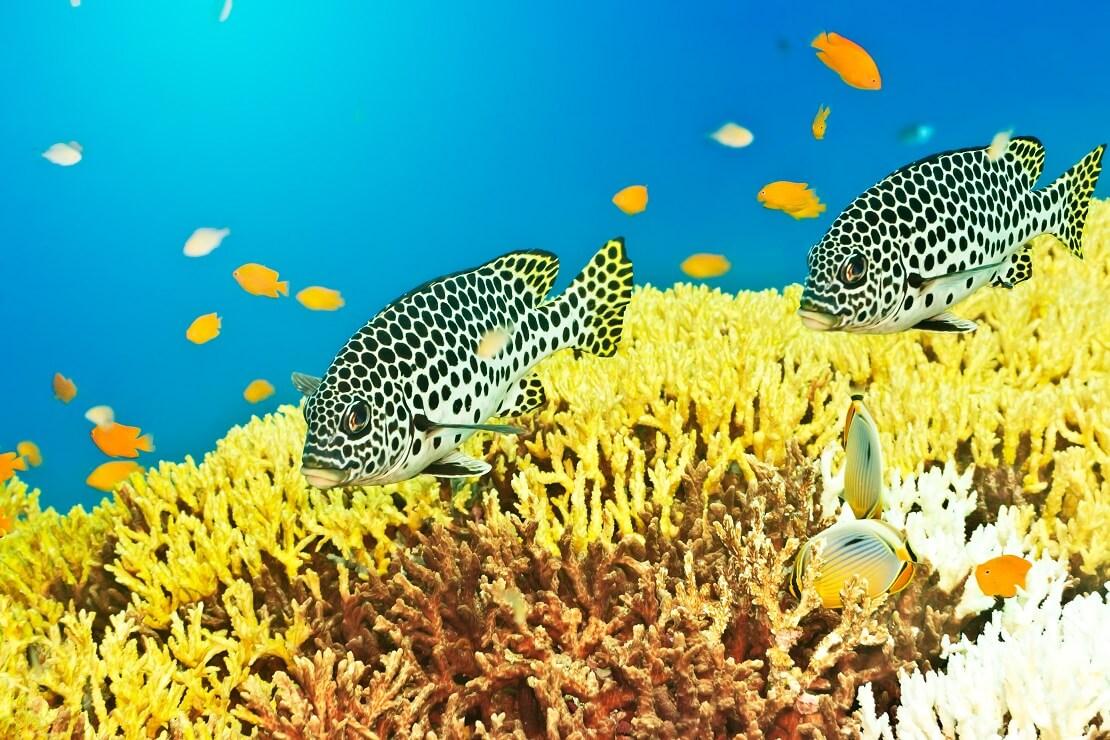 Fische an einem Korallenriff unter Wasser
