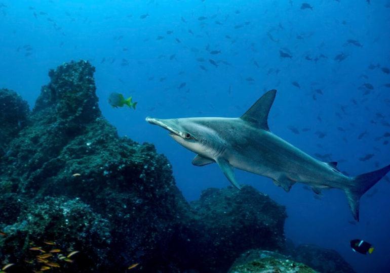 Tauchen bei den Galapagosinseln – Labor der Evolution