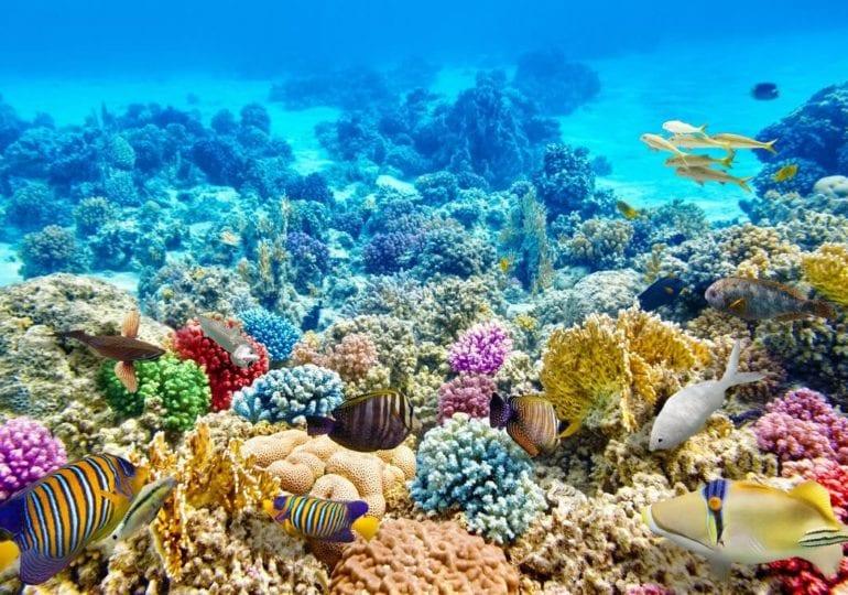 Great Barrier Reef: Das vielleicht größte Naturwunder Australiens