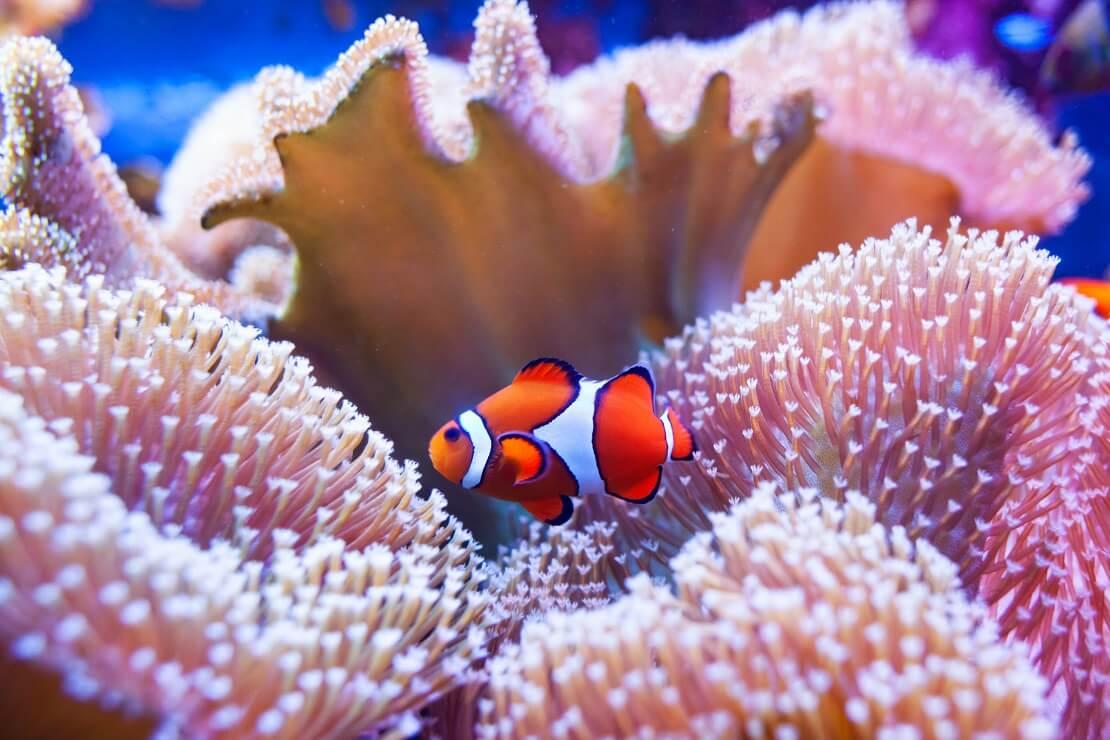 Ein Fisch im Hintergrund ist eine Koralle zu sehen