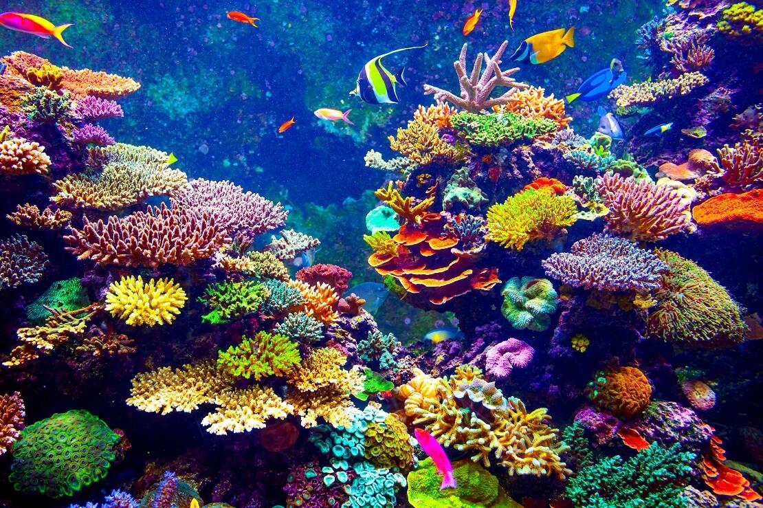 Bunte Korallen und Fische an einem Korallenriff