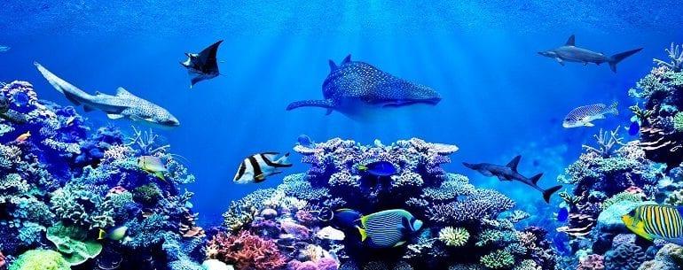 Großer Name, große Taten: Alexandra Cousteau kämpft für den Schutz der Weltmeere
