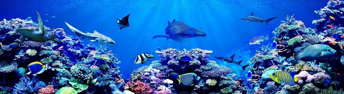 Korallenriff mit Meereslebewesen im blauen Meer