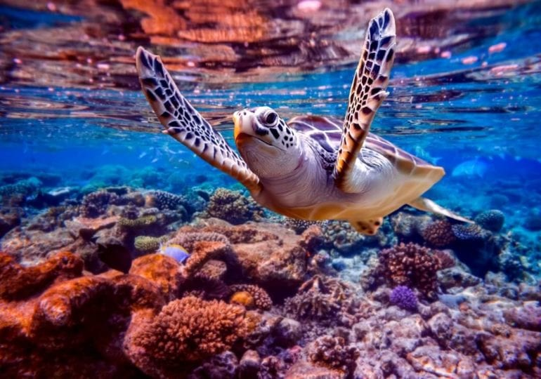 Die Meereswelt hautnah erleben – Tauchen in Sodwana Bay, Südafrika