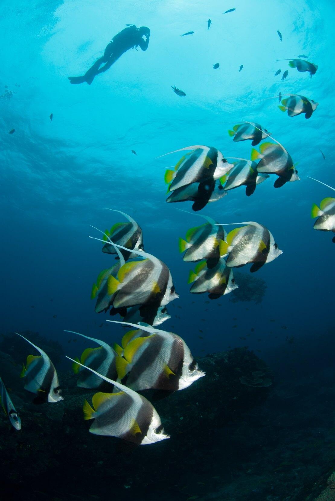 ein Taucher schwimmt unter der Wasseroberfläche unter ihm schwimmt ein Schwarm Fische