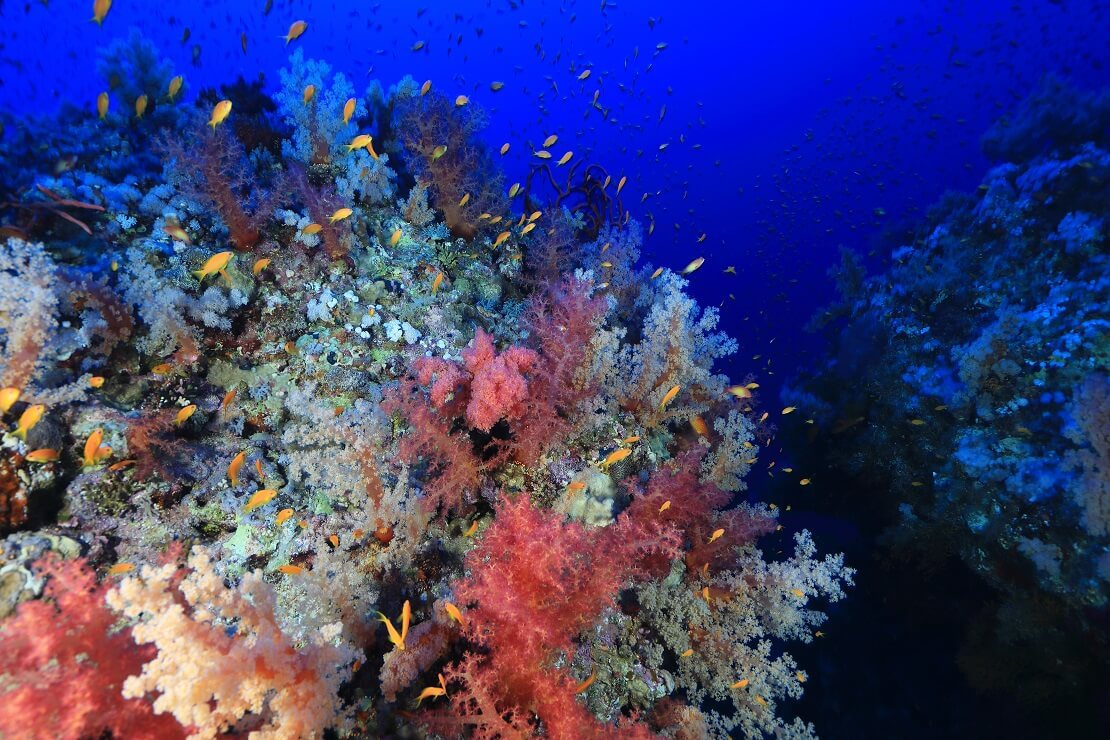 Fische schwimmen über einem bunten Korallenriff