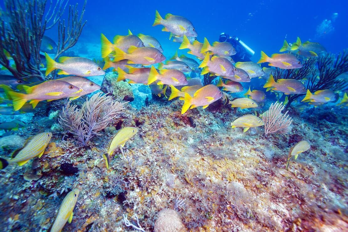 Fische schwimmen über einem Korallenriff