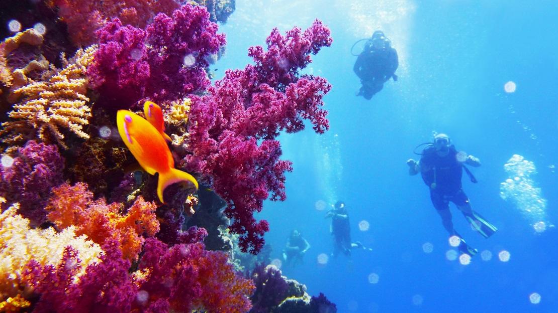 Farbenprächtiges Korallen-Riff lädt zum tauchen ein