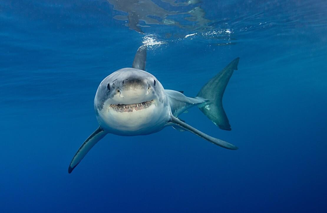 Hai schwimmt unter Wasser
