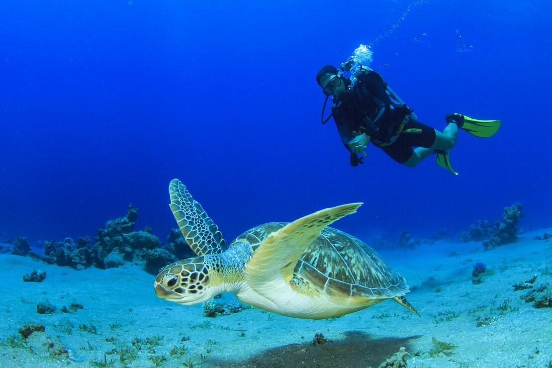 Taucher schwimmt am Meeresgrund mit einer Schildkröte