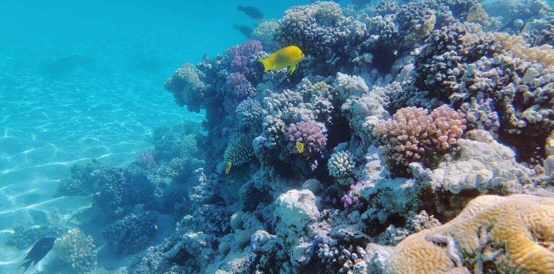 Ägypten: Die Unterwasserwelt entdecken in Makadi Bay