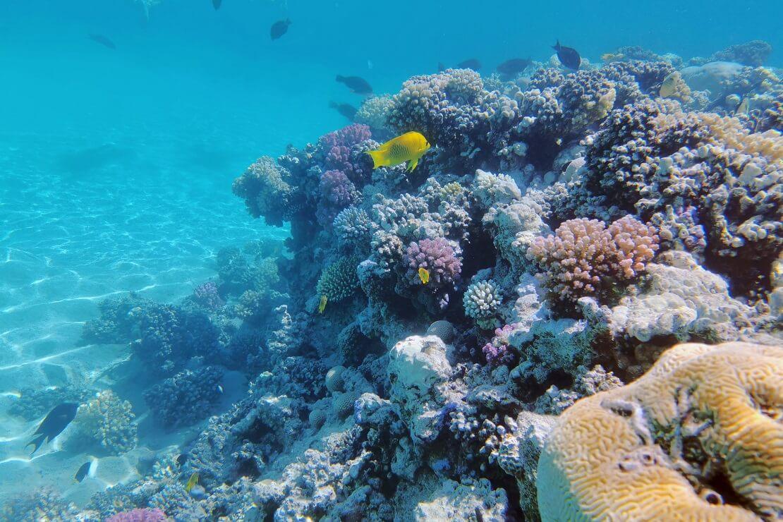 Felsen bewachsen mit Korallen unter Wasser im Hintergrund schwimmen Fische
