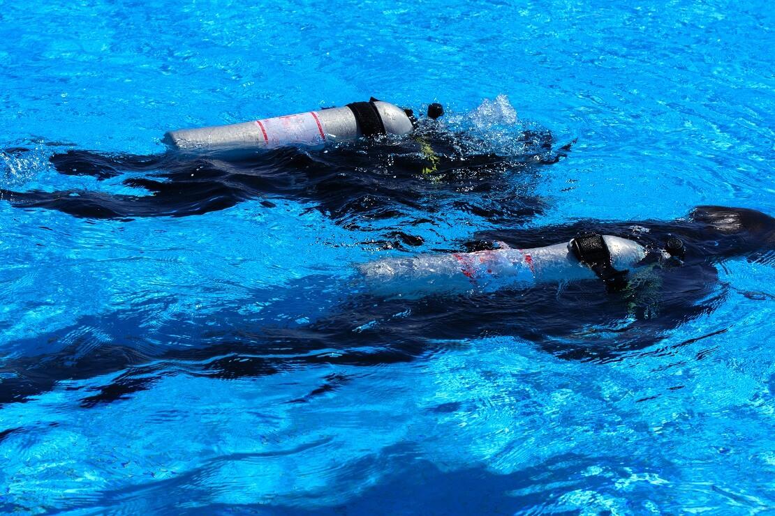 Zwei Taucher unter der Wasseroberfläche mmit einer Pressluftflasche
