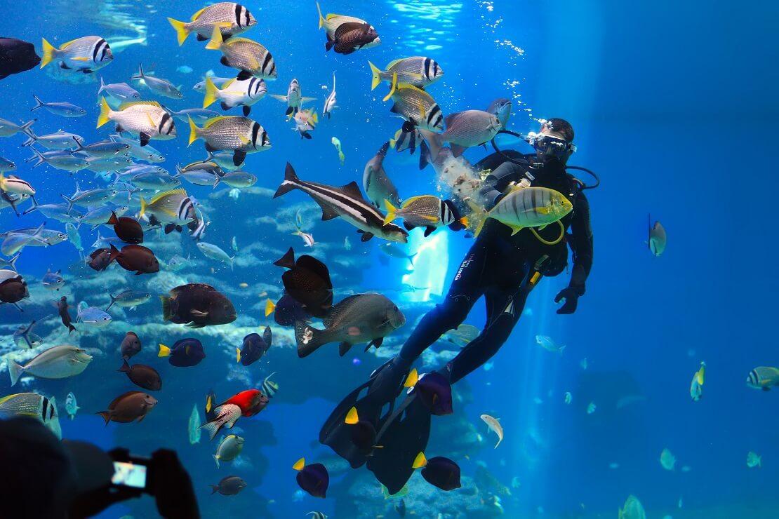 Taucher schwimmt in einem Indoor-Becken mit Fischen
