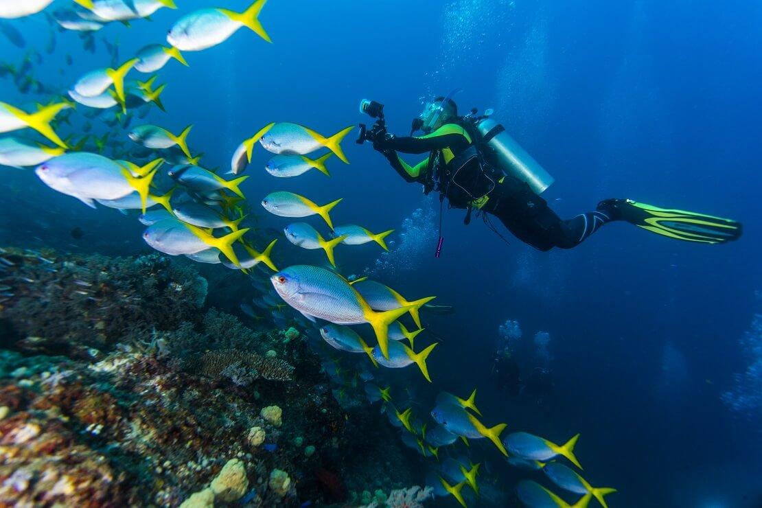 Taucher schwimmt an einem Riff mit Fischen