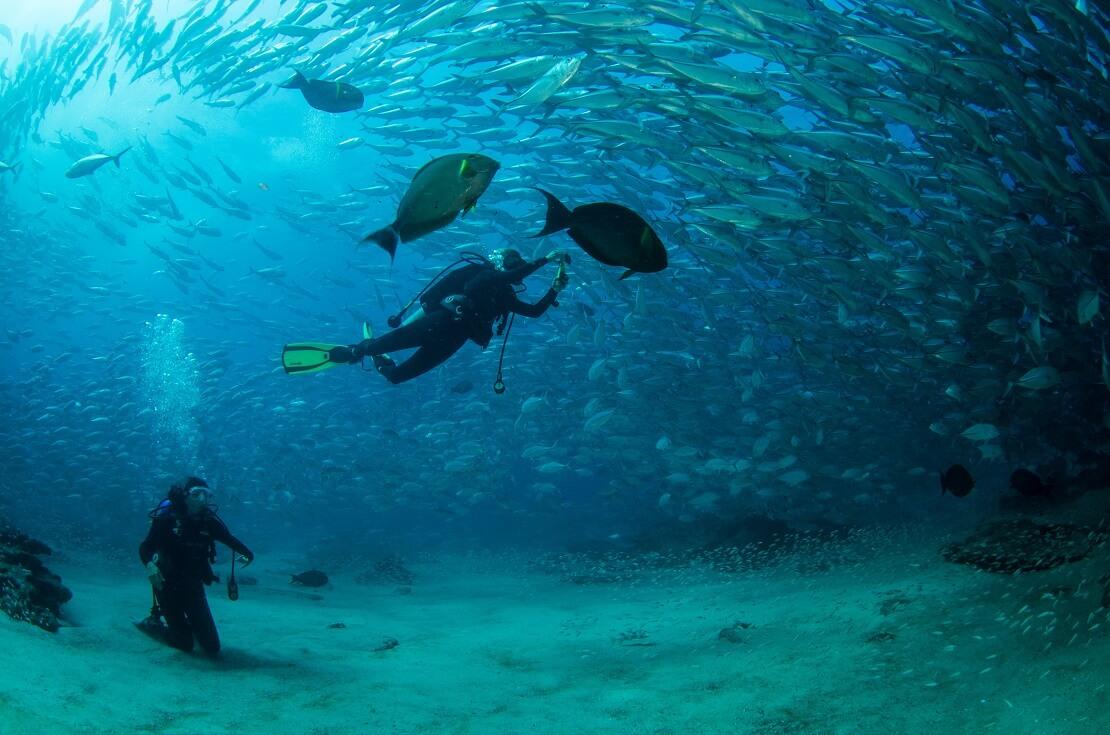 Taucher sind am Meeresgrund über ihnen schwimmt ein Schwarm Fische