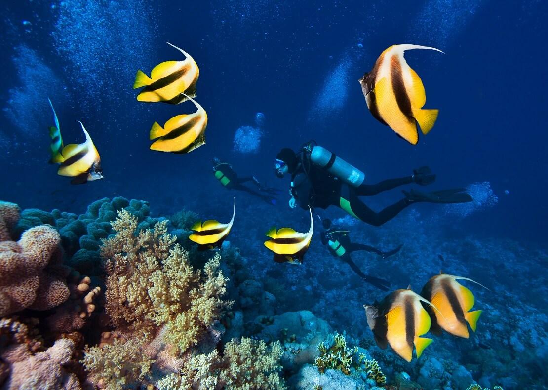 Ein Taucher schwimmt im Meer vor einem Korallenriff vor ihm schwimmen Fische