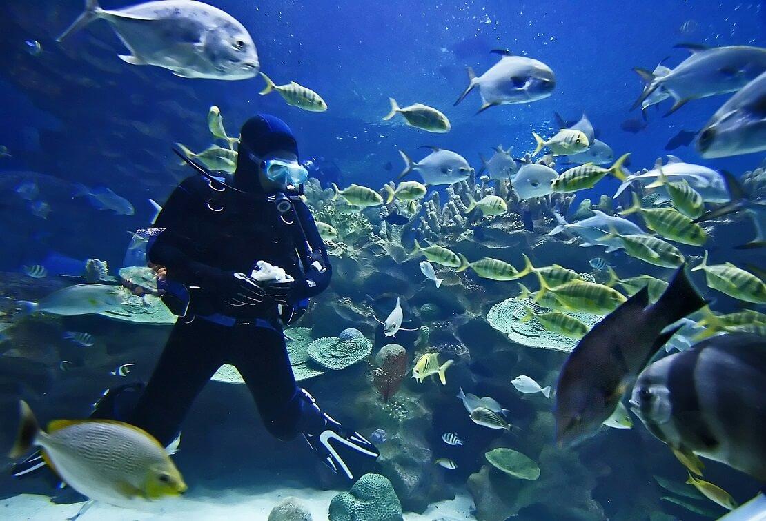 Taucher ist am Meeresgrund mit vielen Fischen