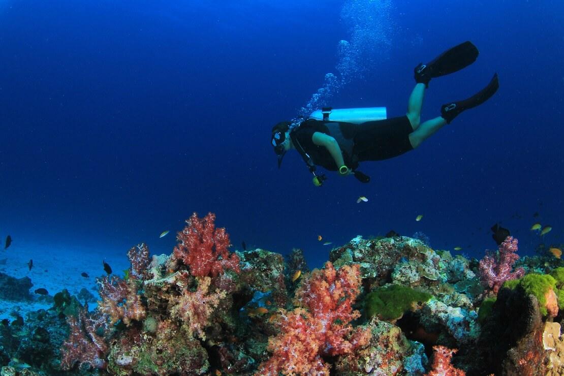 Taucher schwimmt über einem Korallenriff
