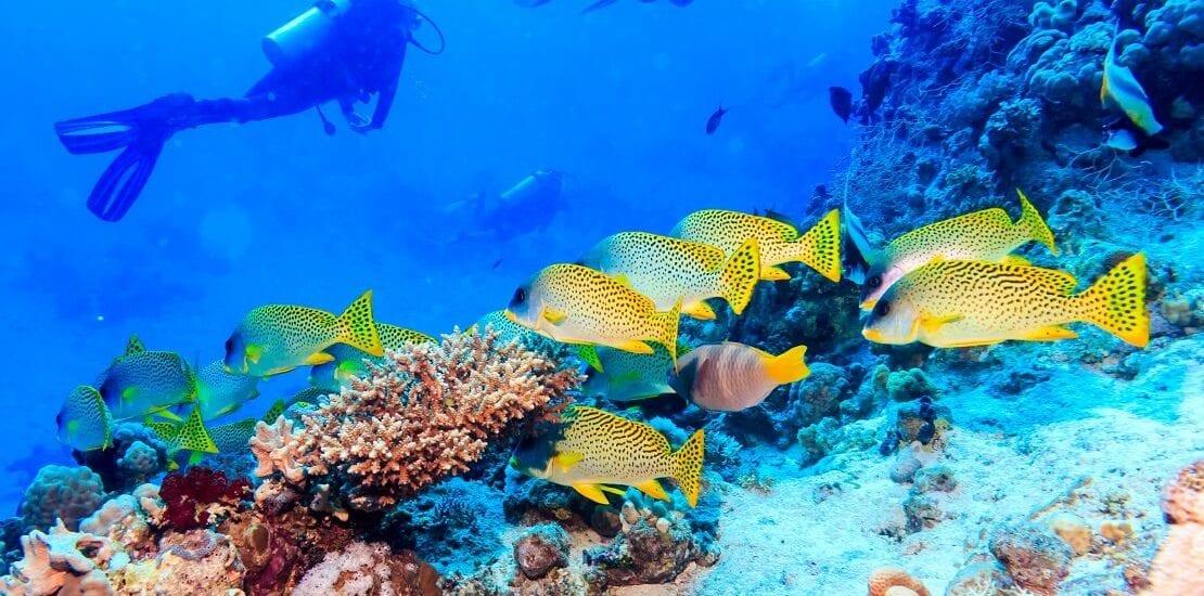 Tauchen im Roten Meer an der Küste von Marsa Alam