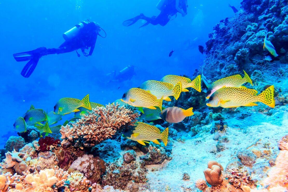 Taucher schwimmen über ein Korallenriff im Vordergrund sind Fische