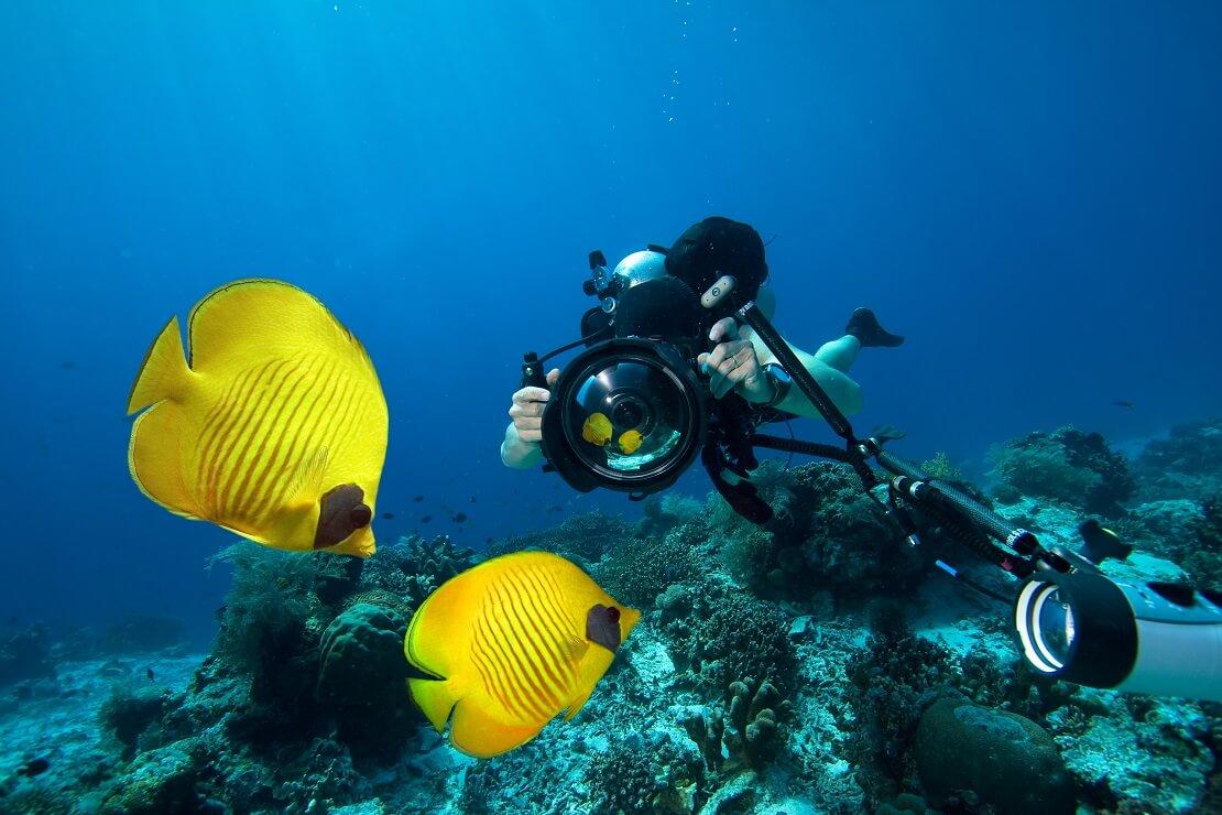 Taucher macht mit einer Kamera ein Foto von Fischen unter Wasser