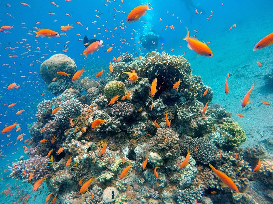 Fische schwimmen bei einem Felsen bewachsen mit Korallen