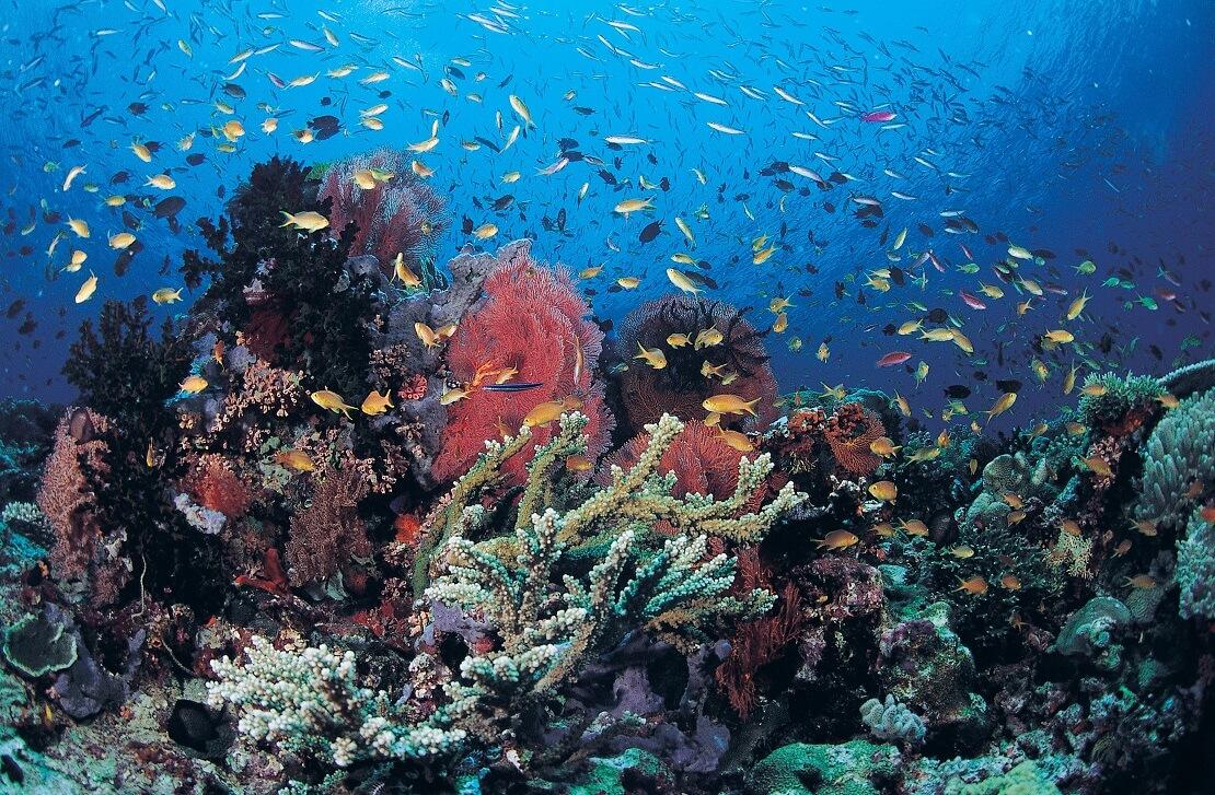 Buntes Korallenriff mit vielen kleinen Fischen