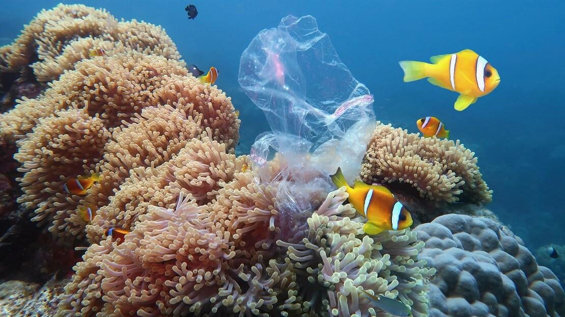 EIne Plastiktüte liegt auf einer Koralle drum herum schwimmen Fische