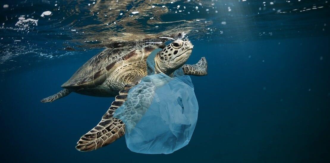 Plastikmüll – Eine Gefahr für Meerestiere