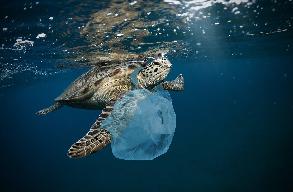 Einer Schildkröte hängt eine Plastiktüte um den Hals