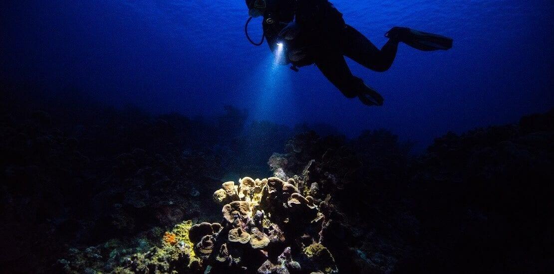Bei Nacht in die Tiefen der Unterwasserwelt eintauchen