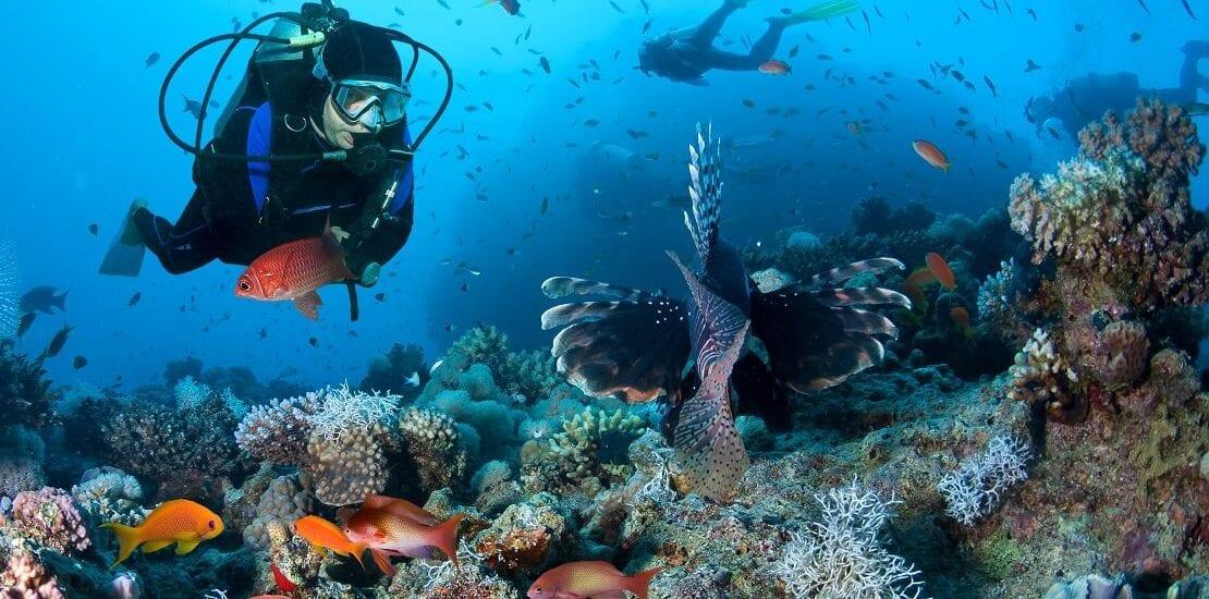 Das Geheimnis der Korallen in der Unterwasserwelt