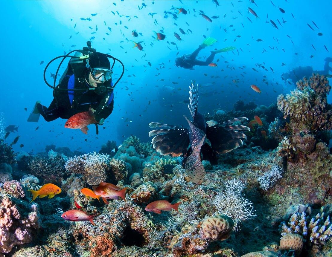 Taucher schwimmt über einem Korallenriff mit Fischen