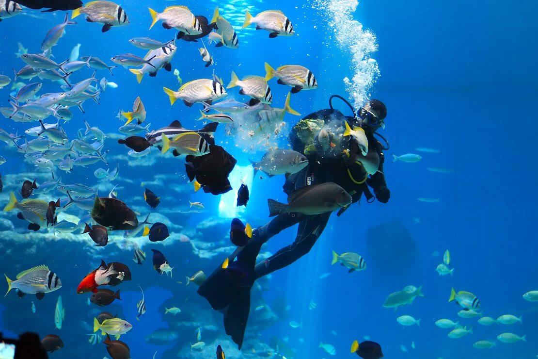 Taucher schwimmt mit Fischen