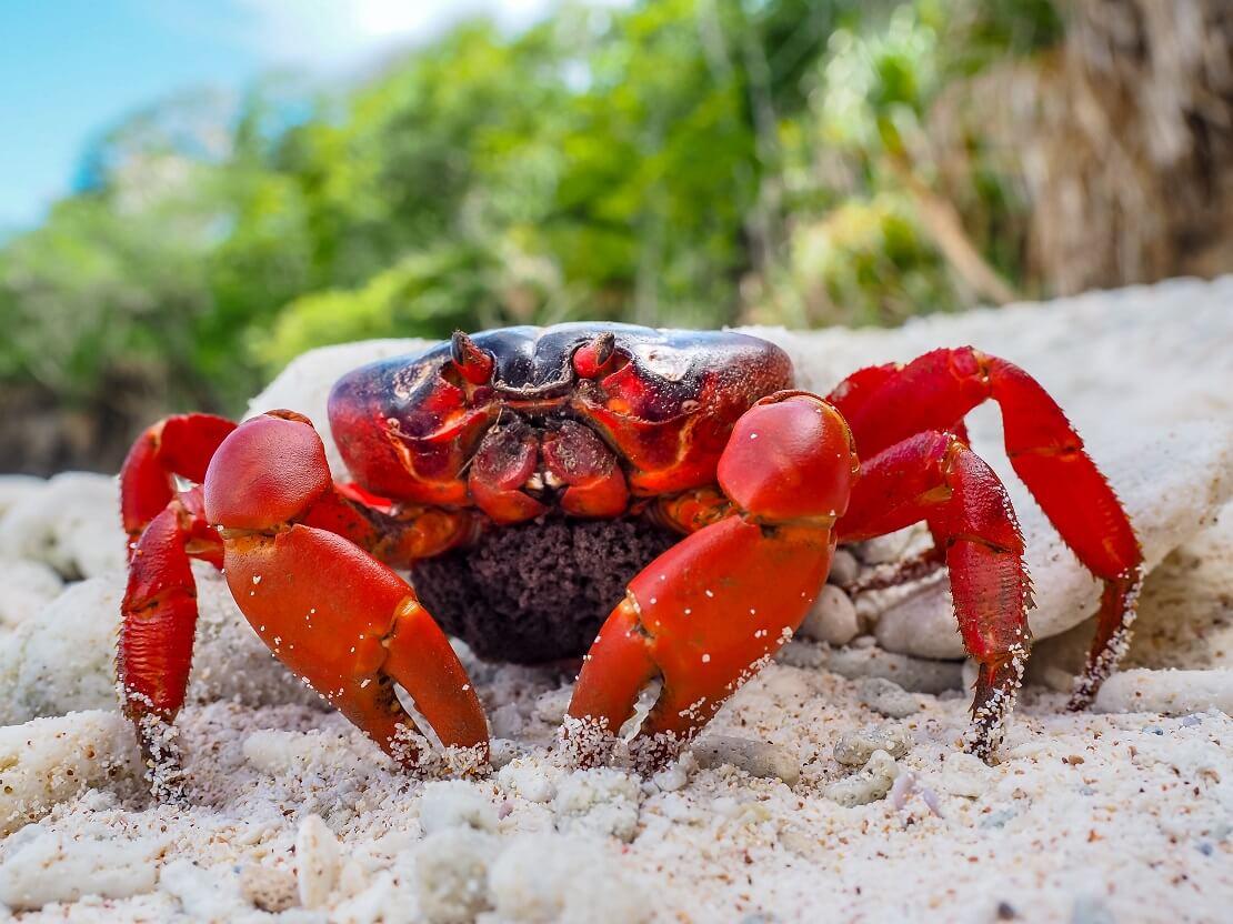 Krabbe im Sand