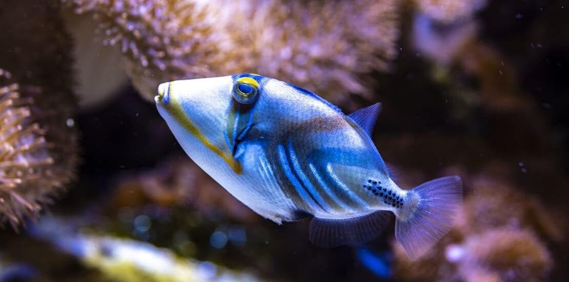 Die gefährlichsten Meerestiere der Unterwasserwelt #2