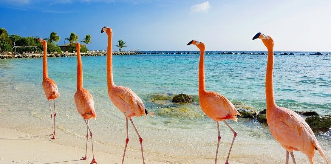 Bonaire: Rund um die Uhr tauchen bei der Insel der Flamingos