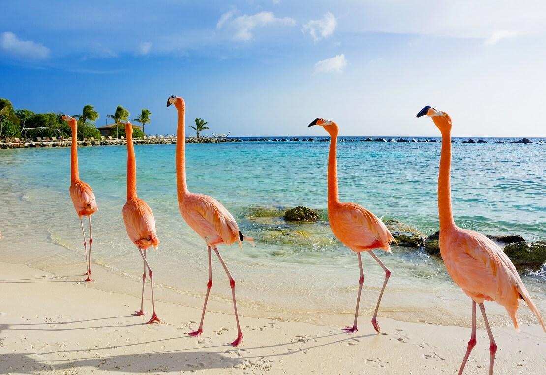Flamingos an einem Stand