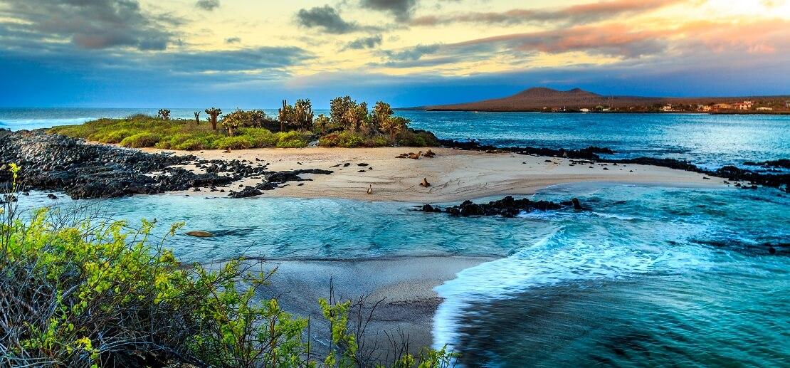 Jedes Mal aufs Neue ein Highlight – Tauchen bei den Galapagosinseln