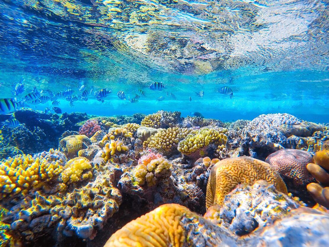 Fische schwimmen unter der Wasseroberfläche der Untergrund voller Korallen und Steinen