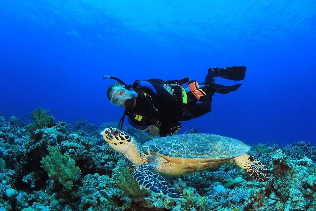 Taucher bei den Malediven mit einer Schildkröte