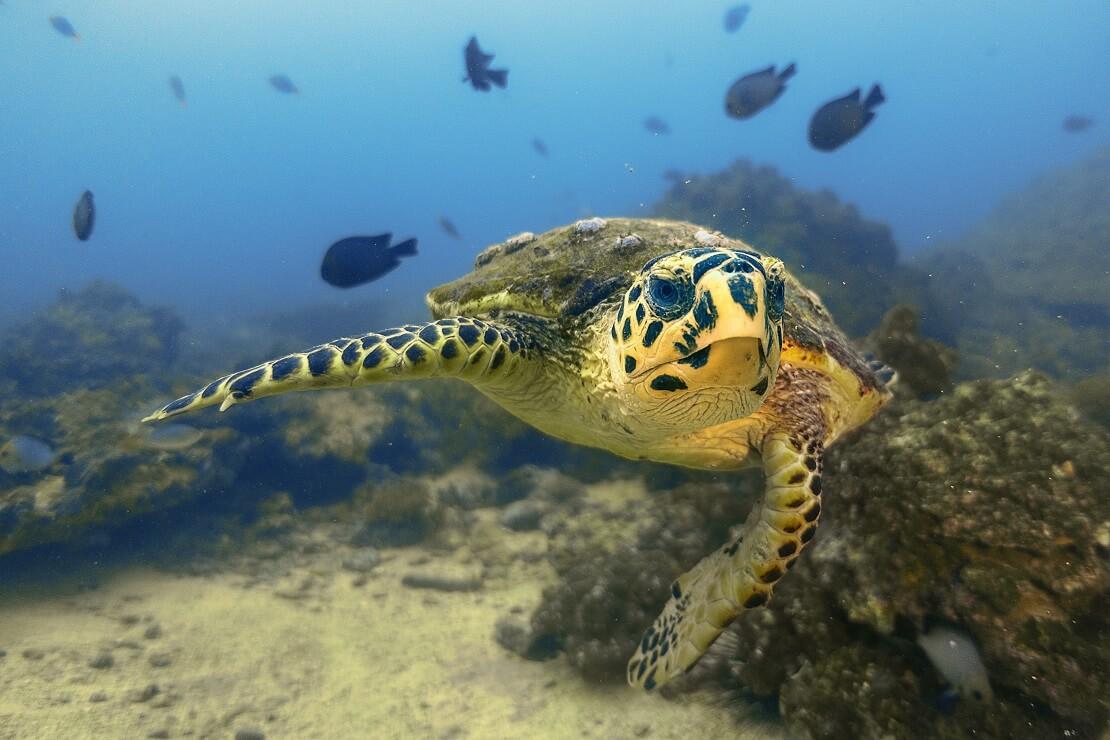 Schildkröte unter Wasserwelt Oman mit Fischen