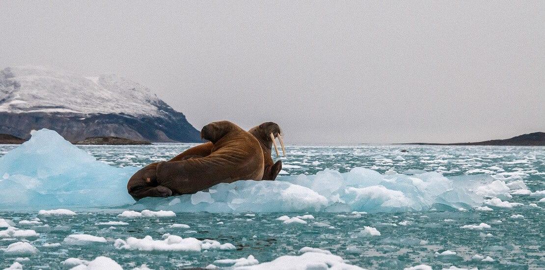 Grönland – Faszinierendes Taucherlebnis in der Antarktis