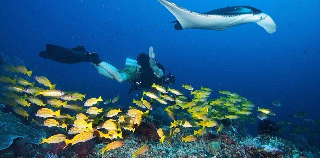 Tauchen bei Mosambik: Besondere Artenvielfalt und bunte Riffe bewundern