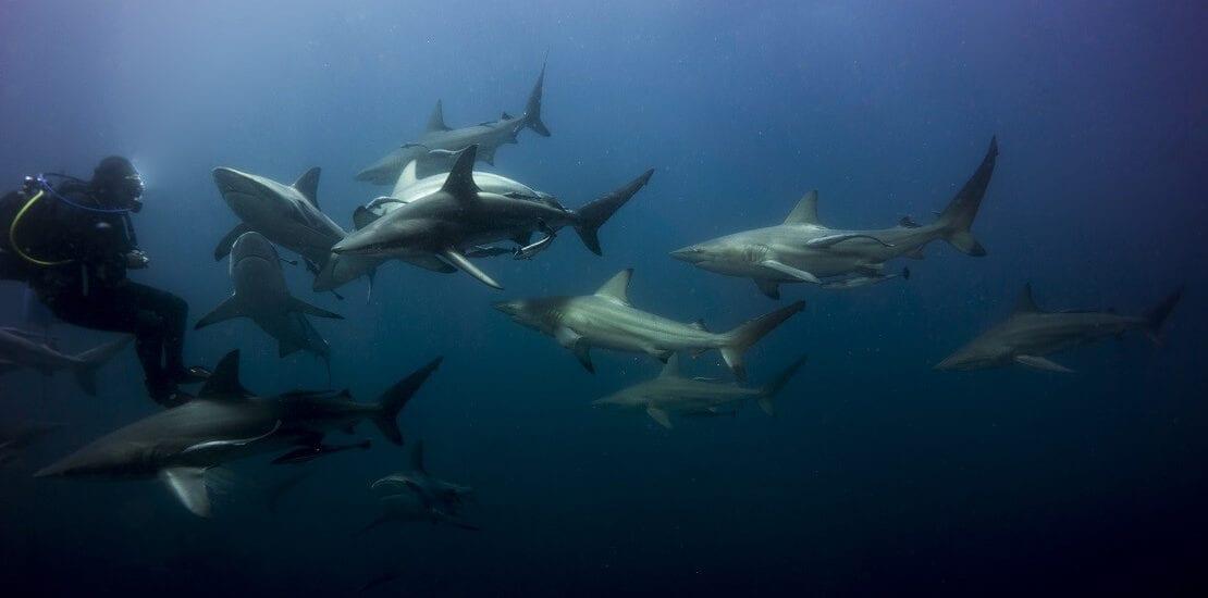 Südafrika – Haitauchen in artenreichen Gewässern
