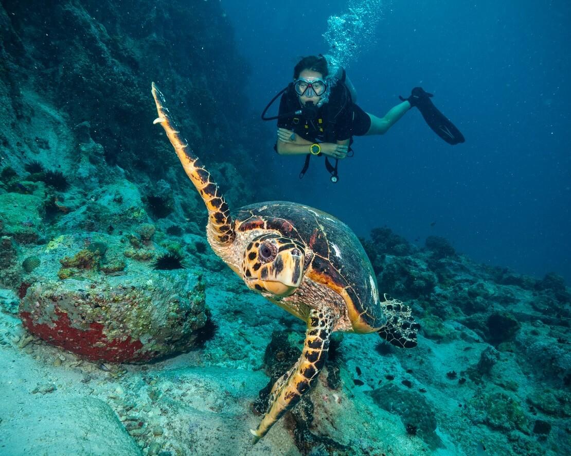 Taucherin schwimmt hinter einer Schildkröte