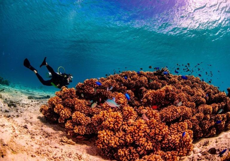Aufregende Höhlen und eine beeindruckende Unterwasserwelt bei Tonga